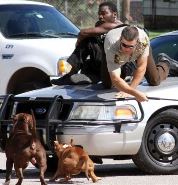Oklahoma Deputy Saves Man From Two Pit Bulls In Attack Mode