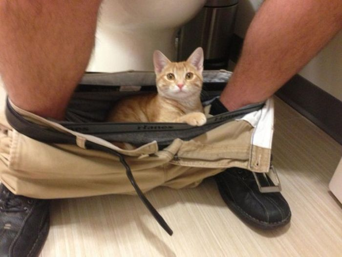 Cats Are Cute But They Can Be Obnoxious Sometimes (43 pics)