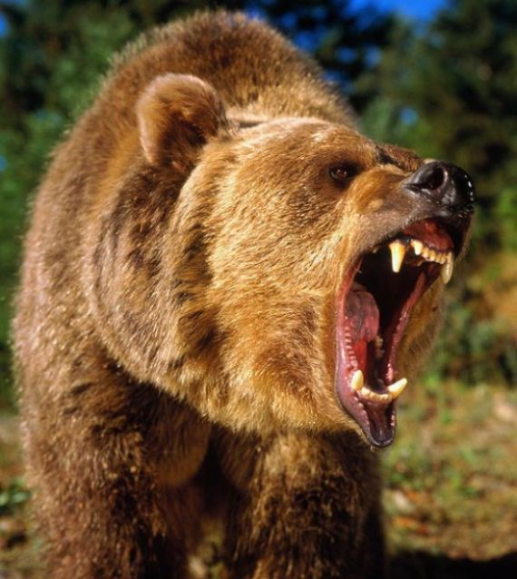 Montana Man Gets Mauled By A Grizzly Bear (4 pics + video)
