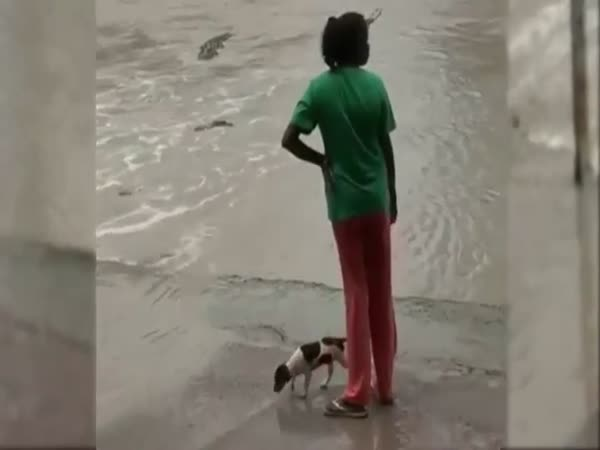 Badass Knows How To Keep Crocs Away From Her Dog