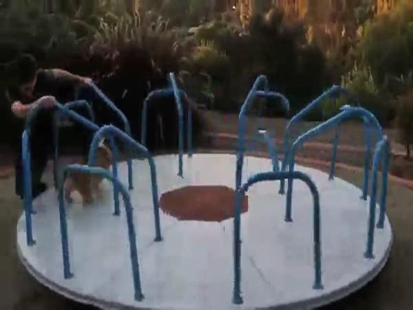 Corgi On A Carousel