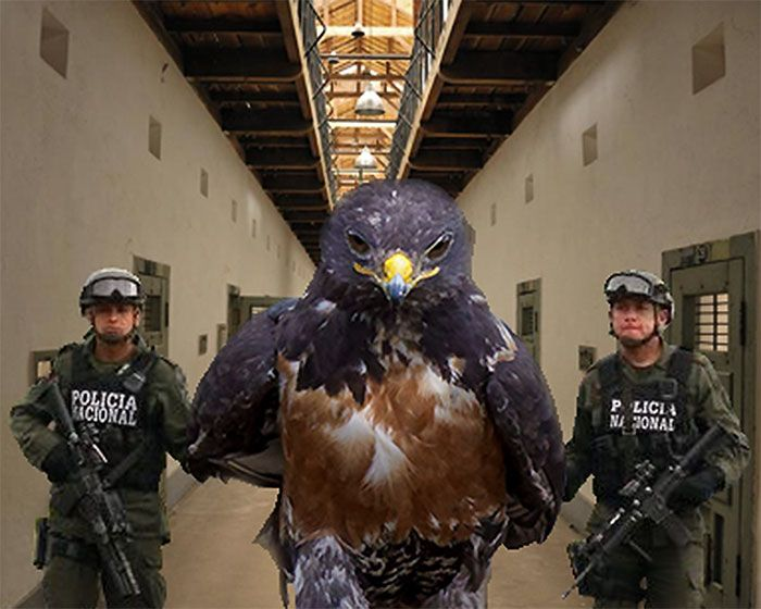 Epic Looking Hawk Sparks Intense Photoshop Battle (45 pics)