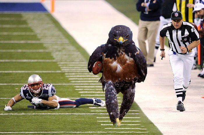 Epic Looking Hawk Sparks Intense Photoshop Battle (45 pics)