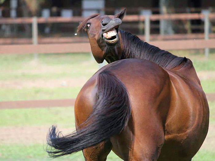 Non-Photogenic Animals That Will Crack You Up (40 pics)