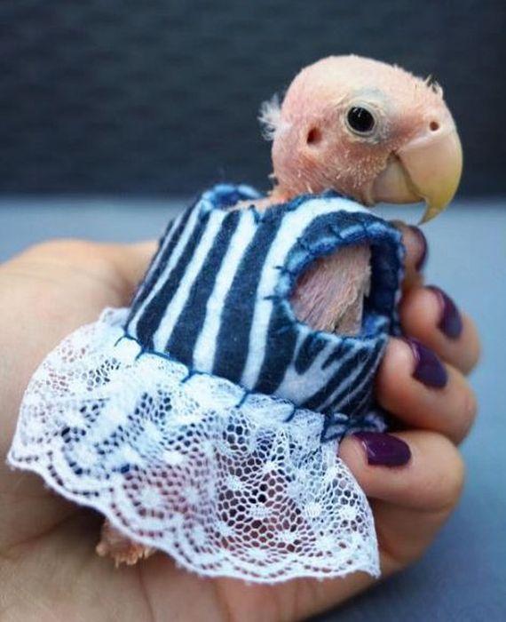 An Adorable Bald Bird Named Rhea Is Becoming An Internet Sensation (9 pics)