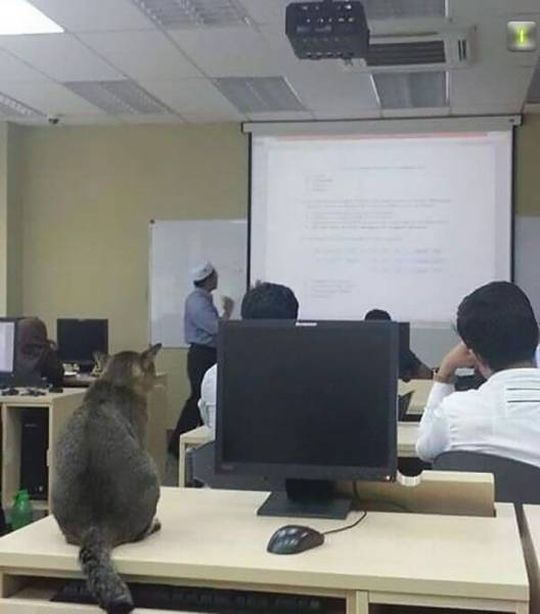 Cat Does What Many Students Do During Class At University (4 pics)