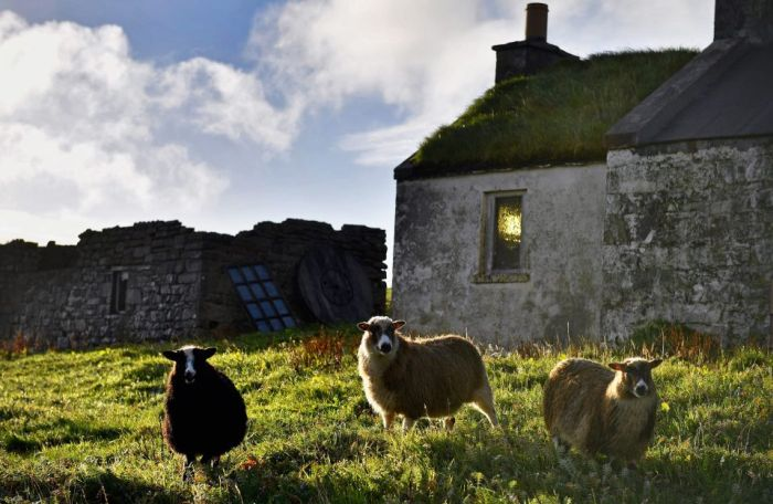 Interesting Pictures Show What Life Is Like On The Tiny Island Of Foula (19 pics)
