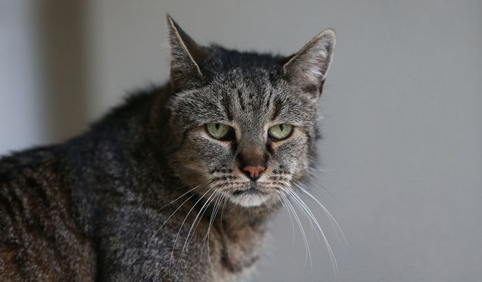 The World's Oldest Cat Is 31 Years Young (7 pics)