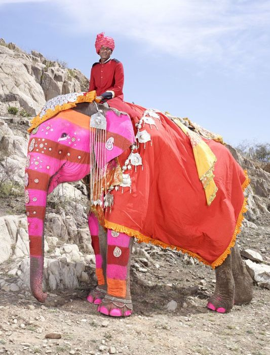 Indian Man Turns Elephants Into Art (20 pics)