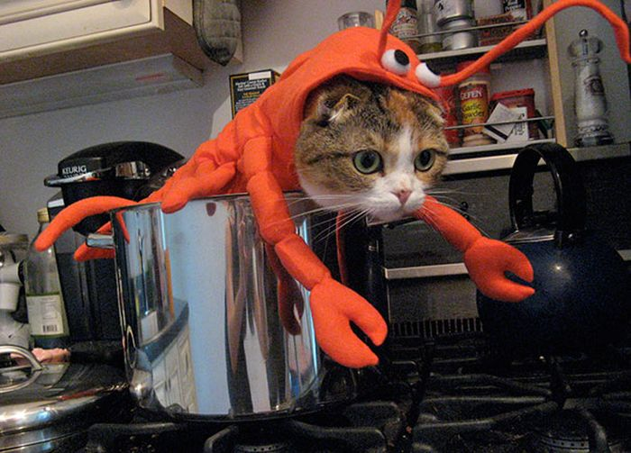 Cool Halloween Costumes For All The Cat Lovers Out There (41 pics)