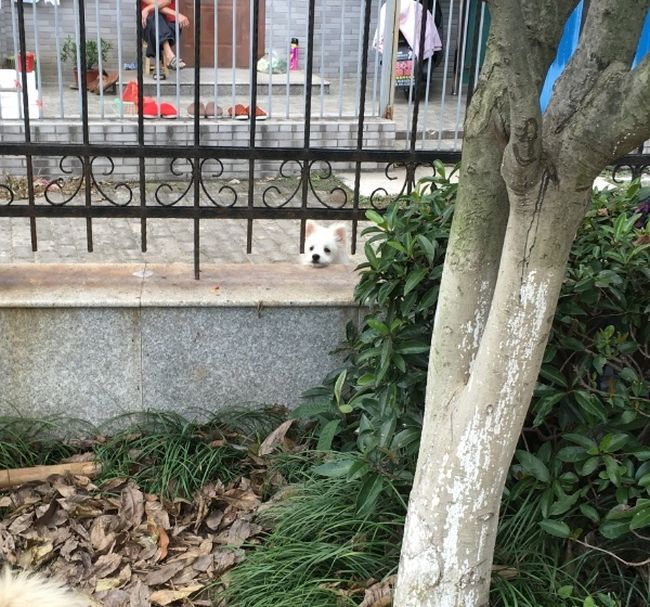 Dog Finds Itself In An Awkward Situation (3 pics)