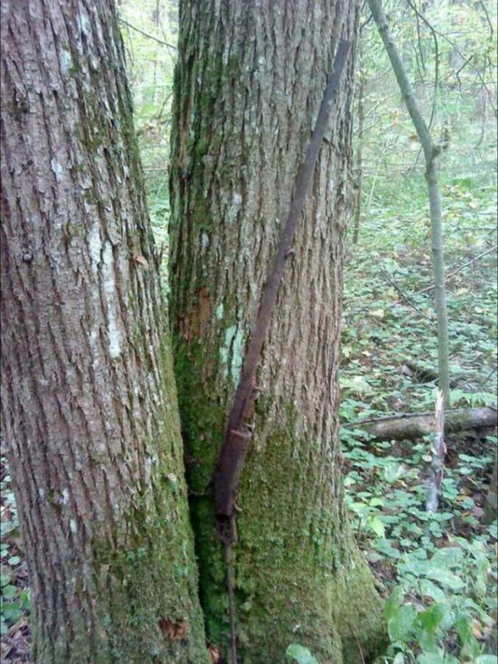 Stubborn Trees That Have Grown Through Objects (43 pics)