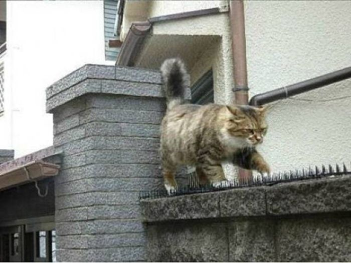 Anti-Cat Spikes Are Completely Useless (4 pics)