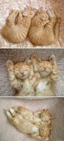 Synchronized Cats Are Absolutely Adorable (36 pics)