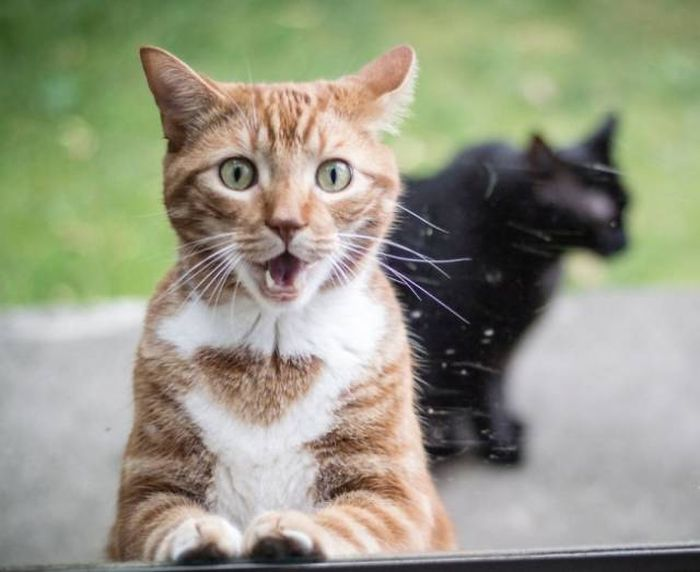 Cats With Facial Expressions That Every Working Human Can Relate To (15 pics)