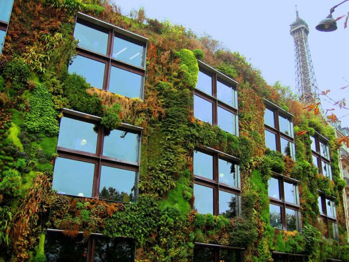 A New Law In Paris Allows Anyone To Plant Urban Gardens (6 pics)