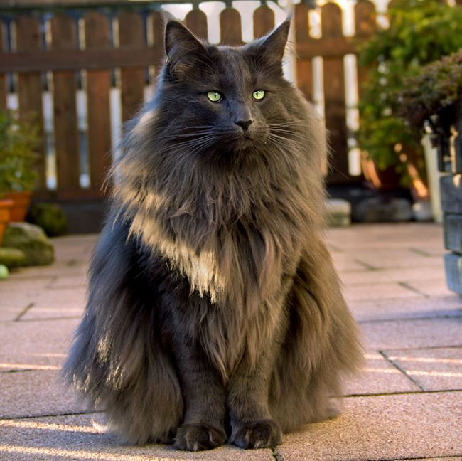 Some Of The Most Beautiful Cats In The Entire World (29 pics)