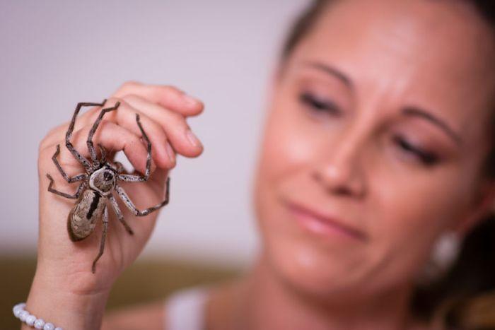 Lisa Van Kula Donovan Is The Steve Irwin Of The Spider World (16 pics)