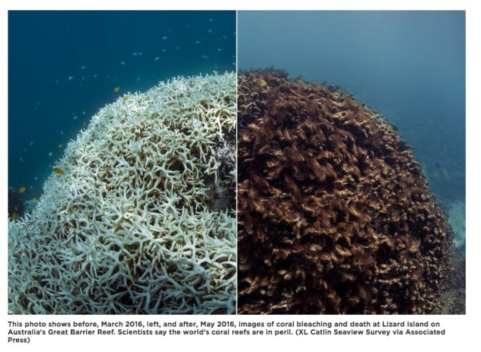 This Obituary To The Great Barrier Reef Is Just Plain Sad (2 pics)