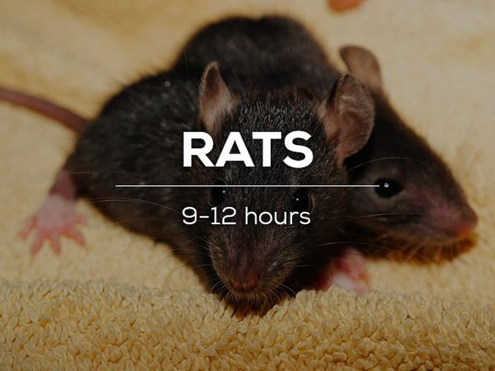 Sleeping Habits Of The Creatures In The Animal Kingdom (16 pics)