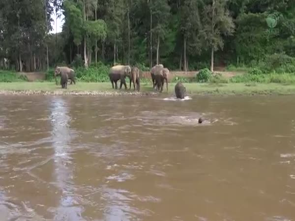 Elephant Comes To Rescue
