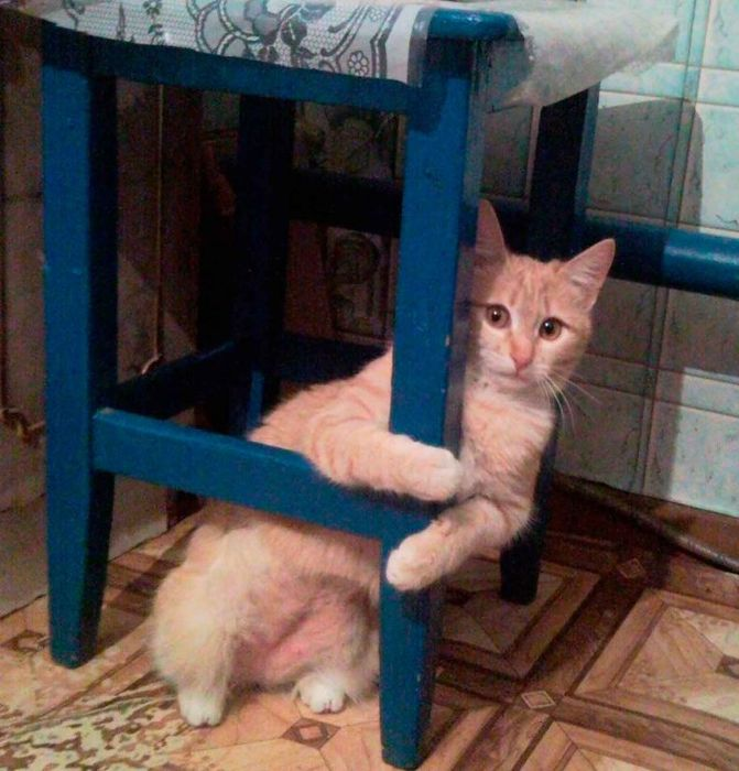 These Cats Just Can't Stop Peeping (24 pics)