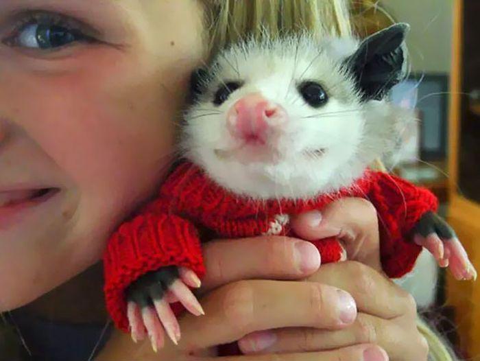 Heartwarming Photos Of Adorable Tiny Animals In Tiny Sweaters (36 pics)
