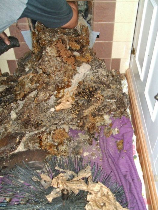 Having A Beehive In Your Chimney Is A Very Bad Time (5 pics)