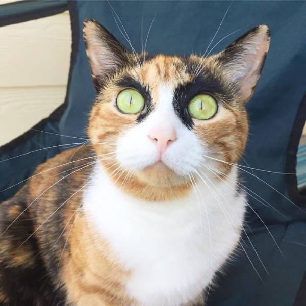 This Cat Never Stops Judging People (9 pics)