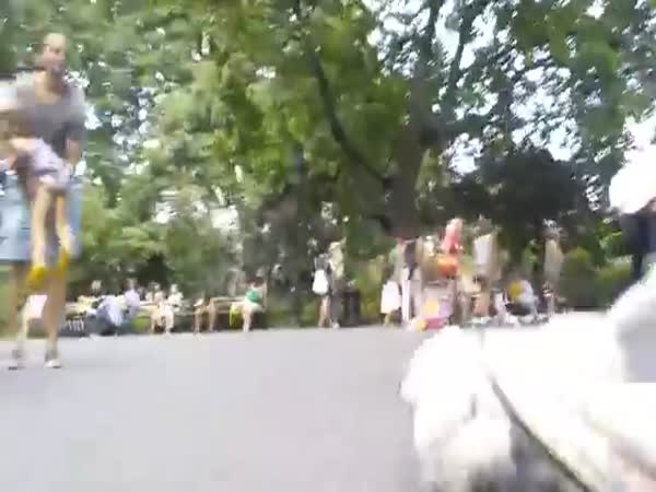 Puppet Dog Runs Around Park