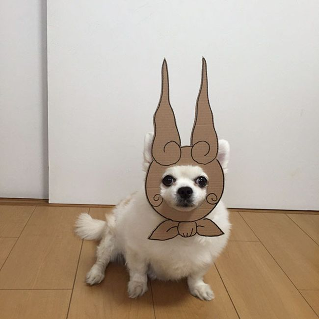 Japanese Woman Uses Her Dog To Create Hilarious Cardbord Cutouts (25 pics)