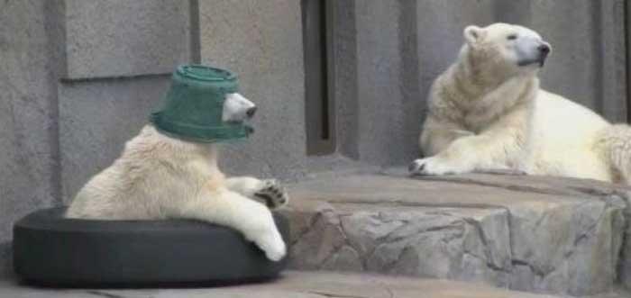 Bear Cub Gets A Brand New Hat (4 pics)