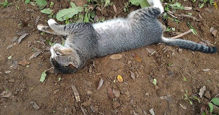 This Heartbroken Cat Spent A Year Living At Her Dead Owner's Grave (4 pics)