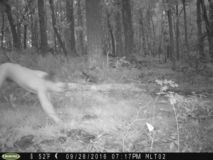 Animal Surveillance Camera Captures Something Very Bizarre (2 pics)