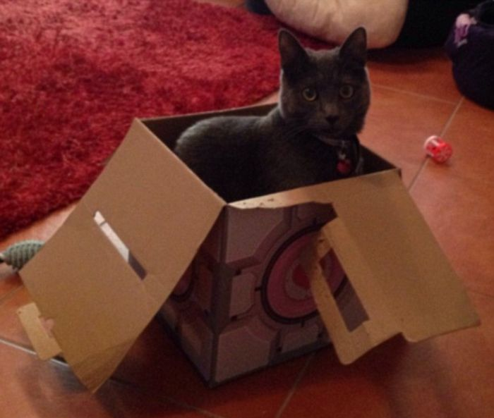 Cat Owners Share Adorable Photos Of Their Pets In Cardboard Boxes (20 pics)