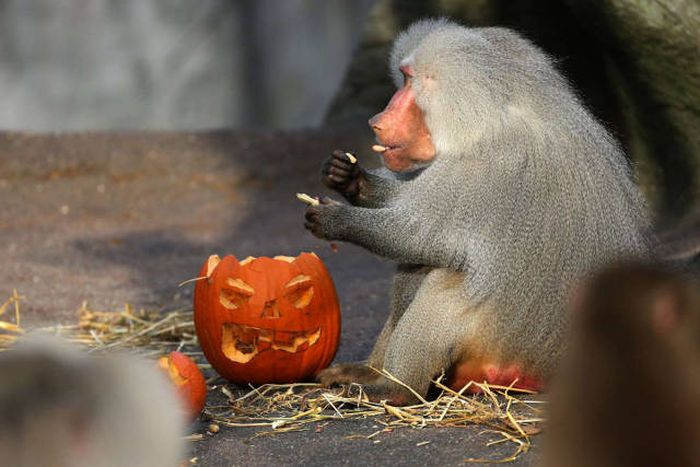 An Awesome Collection Of Halloween Costumes And Halloween Themed Pics (42 pics)