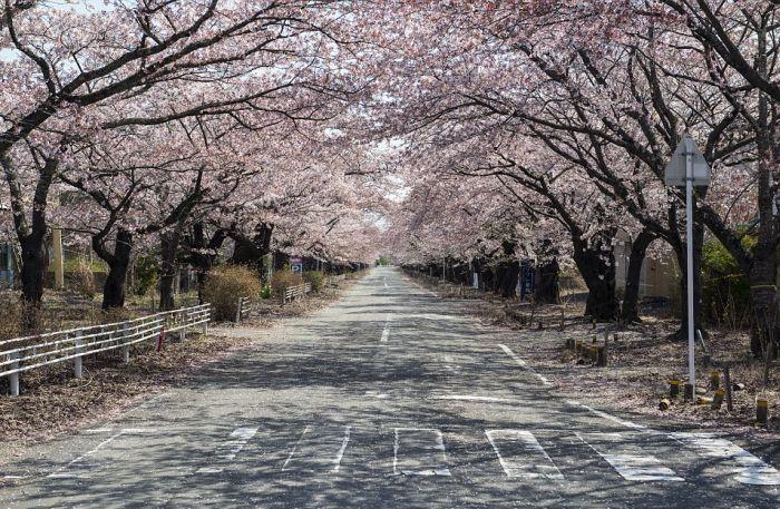 A Rare Glimpse Inside The Abandoned City Of Fukushima (16 pics)