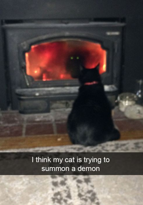 Hilarious Cat Snapchats That You Need In Your Life Right Meow (25 pics)