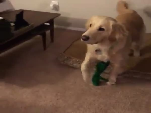 Copy Of Dog's Toy