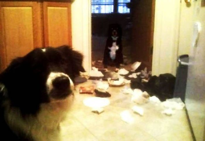Pets Are Adorable Minions Of Destruction When They're Left Alone (32 pics)