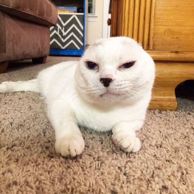 Woman Finds A New Friend In A Deaf And Earless Cat (10 pics)