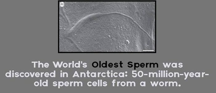 Interesting Facts That You Probably Don't Know About Antarctica (24 pics)