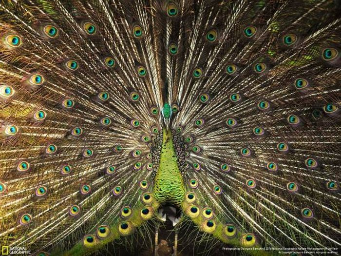 Stunning Pics From National Geographic's Nature Photographer Of The Year Contest (49 pics)