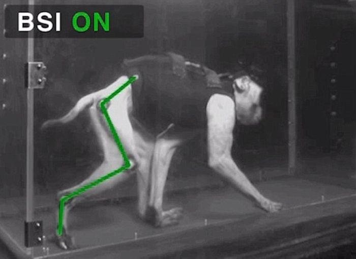 Brain Implants Help Paralyzed Monkeys Walk Again (6 pics)
