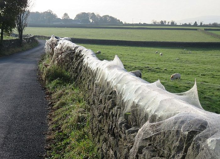 Thousands Of Spiders Invade A Village Overnight (8 pics)