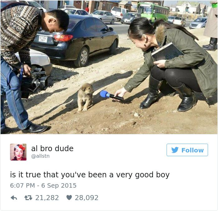 The Best Dog Tweets That The Internet Has To Offer (35 pics)
