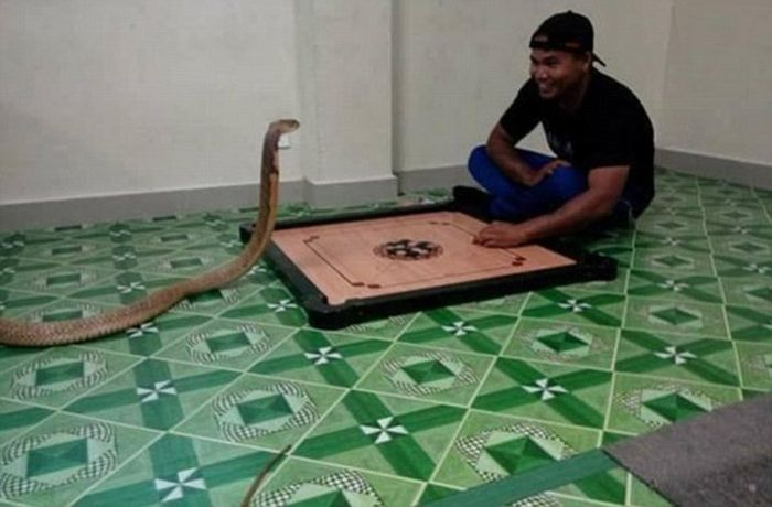 Man Marries His Reincarnated Girlfriend In The Form Of A Cobra (5 pics)