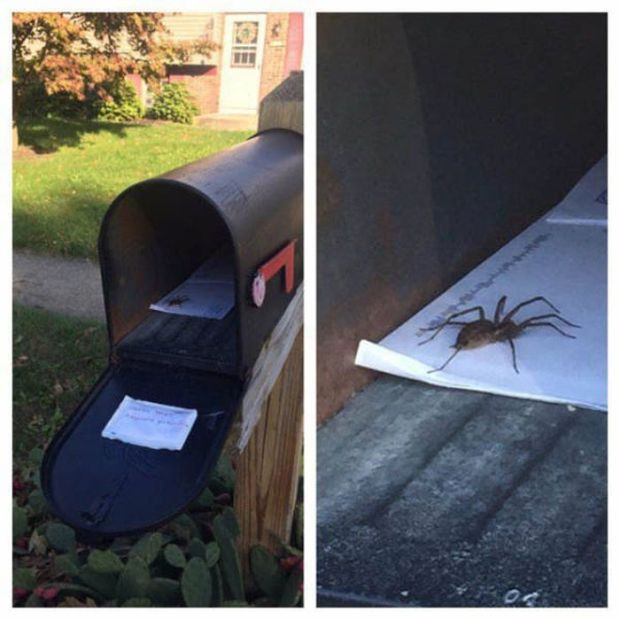 A Large Serving Of Nope With An Extra Side Of Nope (40 pics)