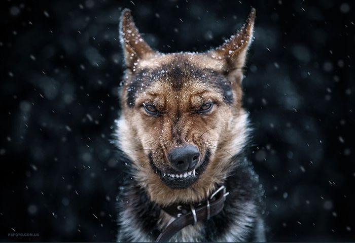 Ukrainian Photographer Takes Stunning Animal Portraits (30 pics)