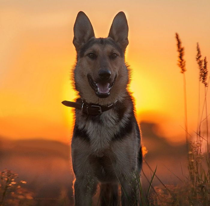 Ukrainian Photographer Takes Stunning Animal Portraits (30 pics)
